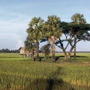 Cabane sur pilotis dans les rizières au Laos - photo: Thierry Voelckel.