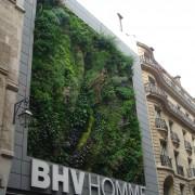 Mur végétalisé d'une boutique parisienne - photo. Karine Terral.