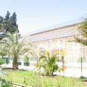 Serre du Jardin des Plantes à Montpellier (34) photo: Odile Besème.