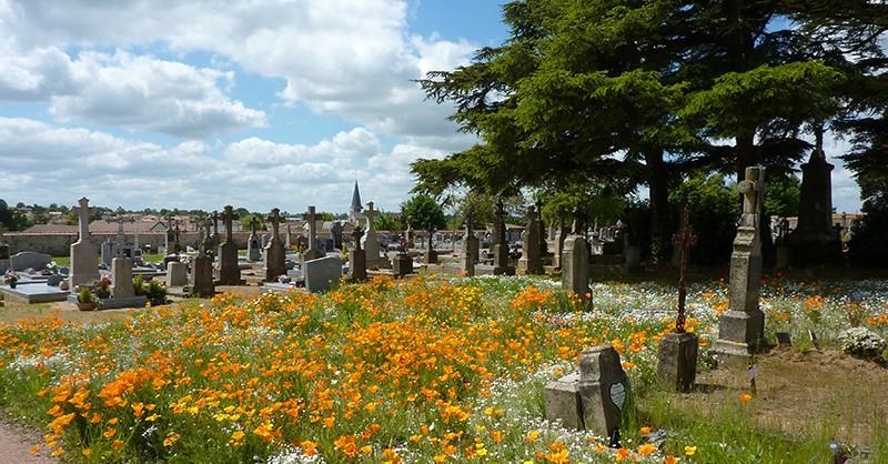 vivaces dans un cimetière des Deux-Sèvres