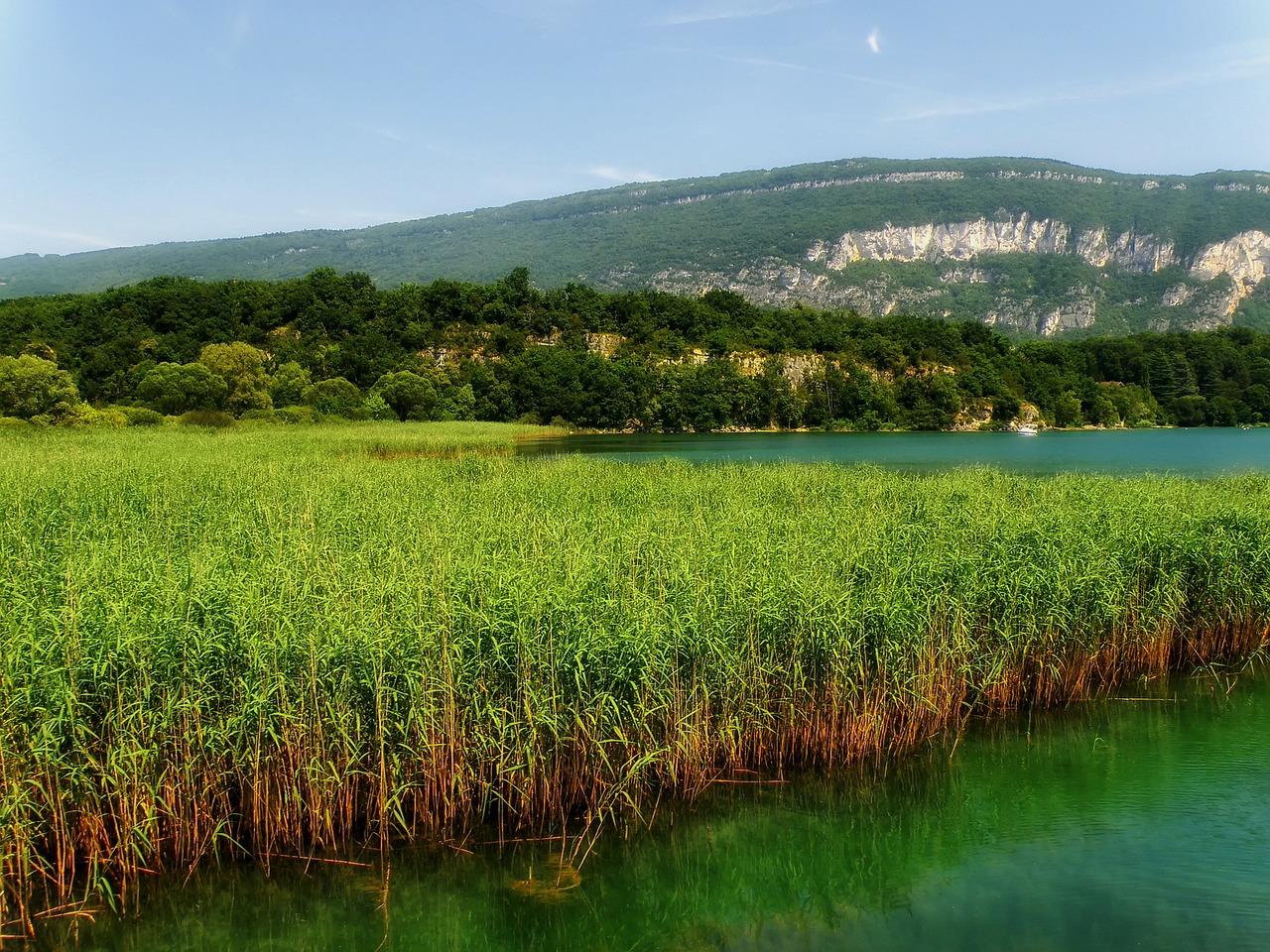 paysage de roselière
