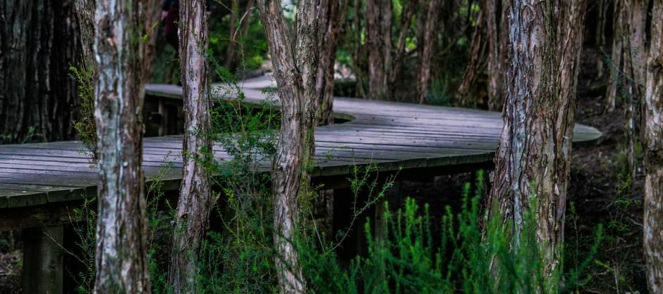 cheminement en bois en forêt