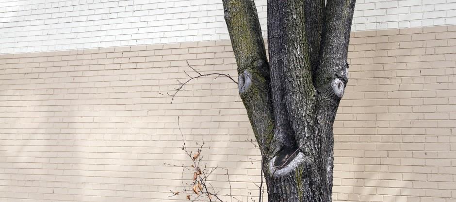 arbre devant un mur de briques