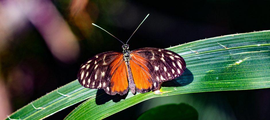 butterfly-1600081_1280
